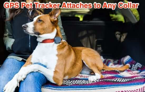 GPS dog cat collar pet tracker tracking device
