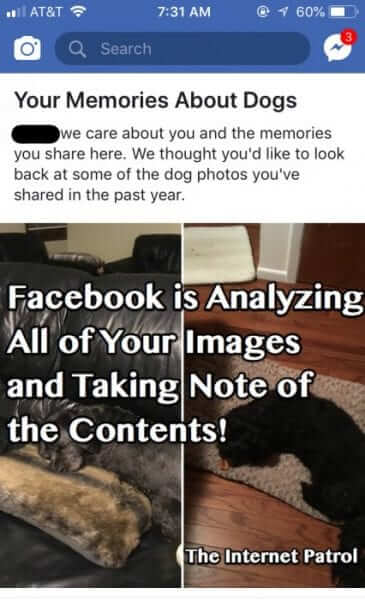 facebook image dogs dog analyizing content-1