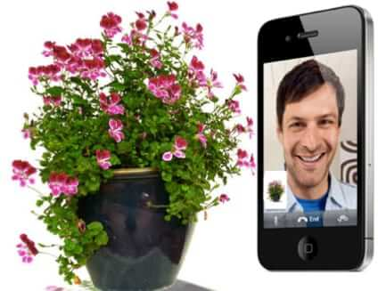 facetime with your plants