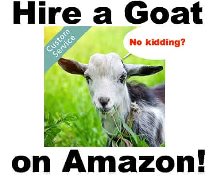 hire rent goats amazon
